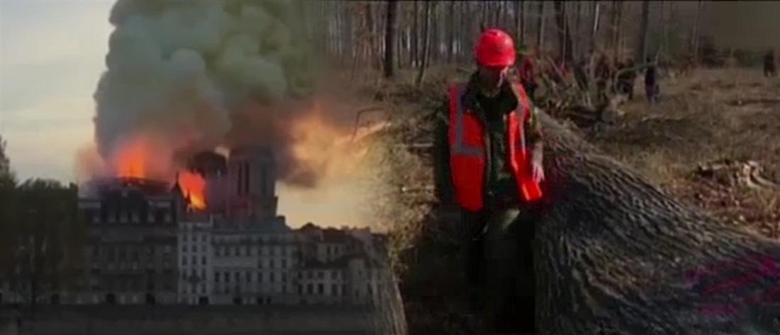 Παναγία των Παρισίων: από βελανιδιές η αναδόμηση στο εμβληματικό βέλος! (βίντεο)
