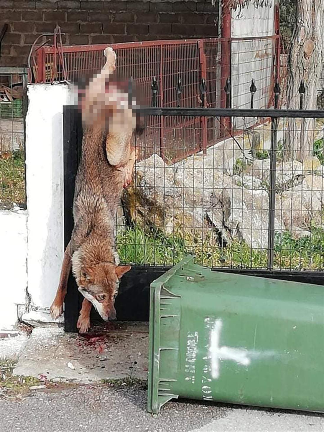 Θεσσαλονίκη - λύκος - κάγκελα