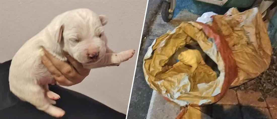 Έβαλαν κουτάβια σε σακούλα και τα πέταξαν στα σκουπίδια (εικόνες)