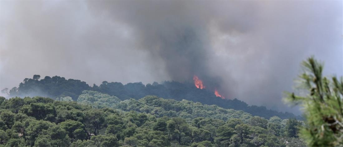 Φωτιά στα Γεράνεια Όρη: Αναζωπύρωση στα Μέγαρα, εκκένωση οικισμού