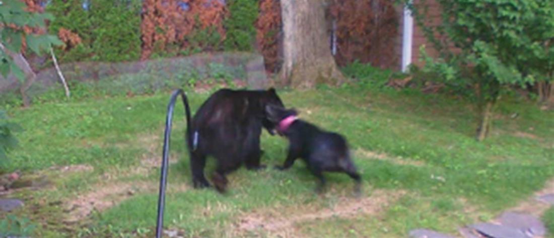 Βίντεο: Σκύλος τρομοκρατεί και διώχνει αρκούδα (βίντεο)