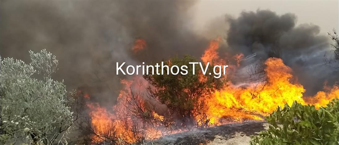 Μεγάλη φωτιά στο Καλέντζι Κορινθίας (εικόνες)