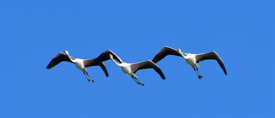γίγαντας μακρύ πουλί γυμνό φωτογραφία των κυριών