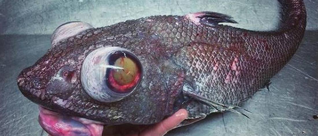"""Ψαρεύει """"εξωγήινα"""" πλάσματα και κάνει πάταγο στα social media! (εικόνες)"""