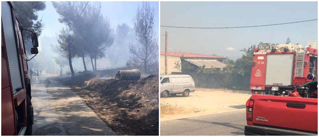"""""""Συναγερμός"""" από πυρκαγιά στην Αρτέμιδα"""