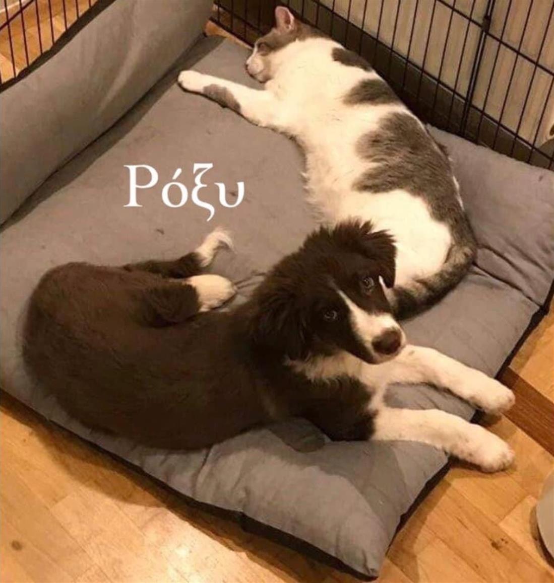 Γλυκά Νερά - Σκύλος - Ρόξυ