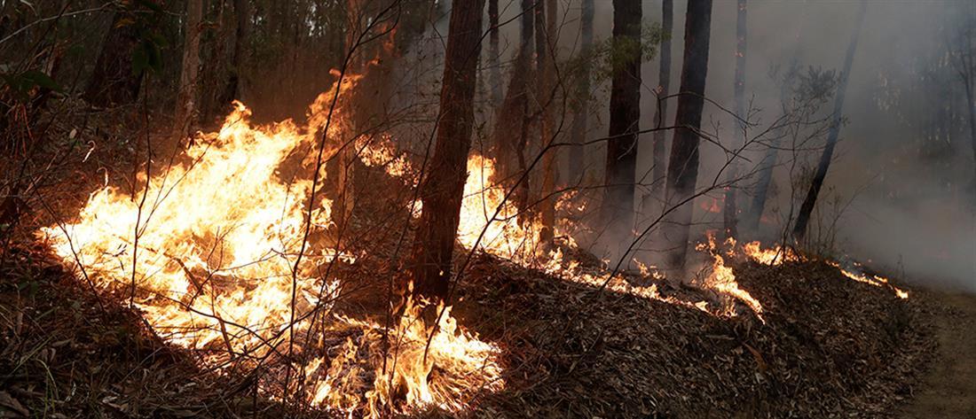 AP - Αυστραλία - πυρκαγιά
