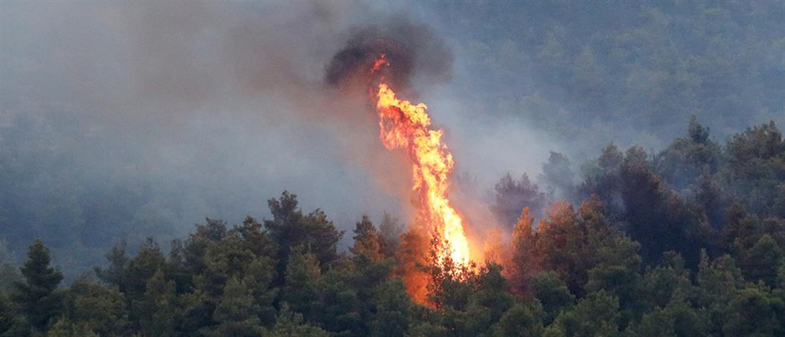 """Ολονύχτια """"μάχη"""" με τις φλόγες στην Τανάγρα"""
