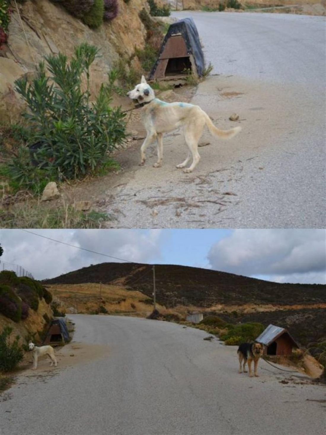 Χανιά - κακοποίηση σκύλων