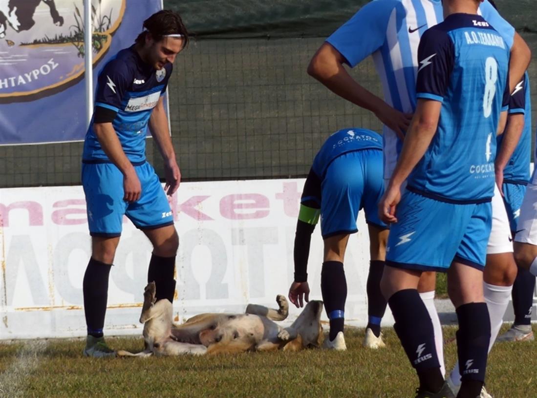 σκυλίτσα σε αγώνα ποδοσφαίρου