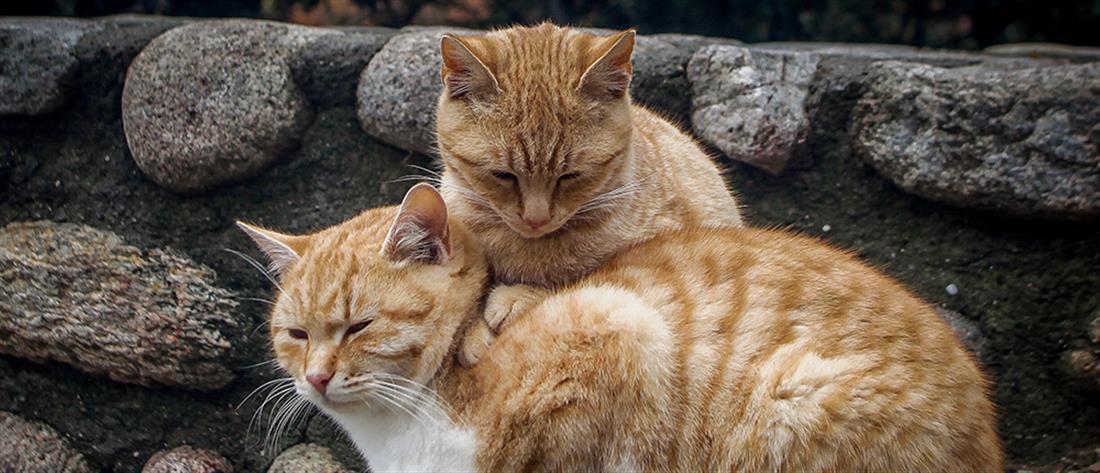 0580ed0ac5a1 Έρευνα βεβαιώνει  Οι γάτες αναγνωρίζουν το όνομά τους