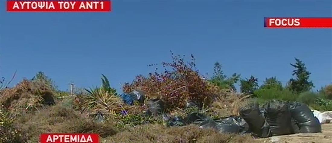 """Αυτοψία ΑΝΤ1 στη Λούτσα: καμπανάκι από τους κατοίκους για νέο """"Μάτι"""" (βίντεο)"""