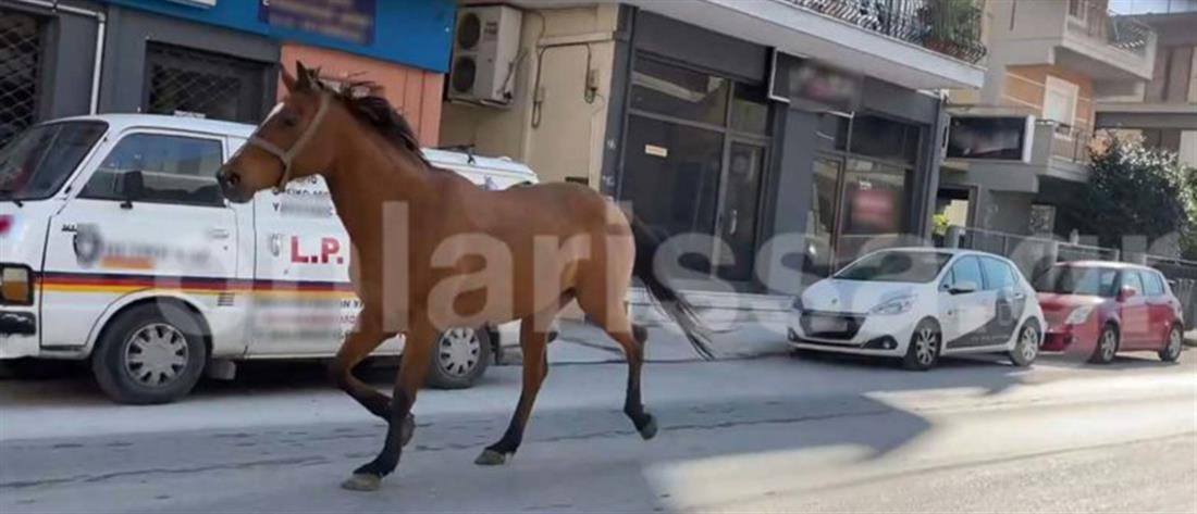 """Άλογο """"έκοβε βόλτες"""" στο κέντρο της Λάρισας (βίντεο)"""