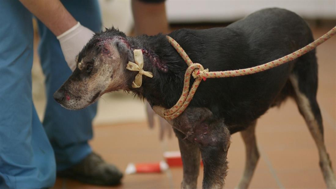 VICE SPECIALS - Εγκατάλειψη - Κακοποίηση - Υιοθεσίες Ζώων