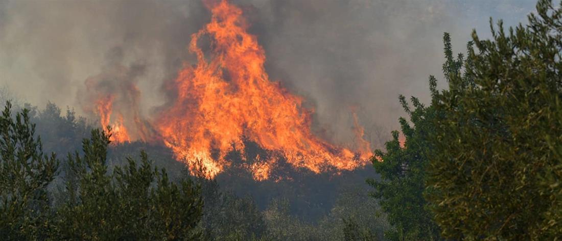 Βόνιτσα: Φωτιά στην περιοχή Θυρίο