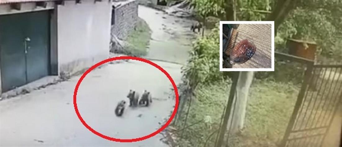 """Αρκουδάκια τα… """"έτσουξαν"""" στο Μέτσοβο (βίντεο)"""