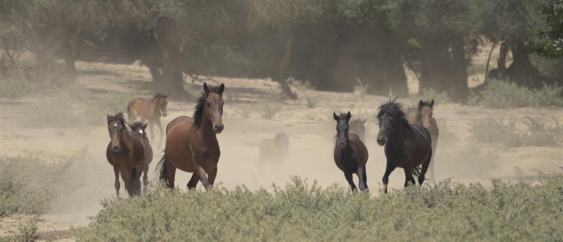 Φωτιά στην Βαρυμπόμπη: Άλογα έτρεχαν στην πλατεία για να σωθούν