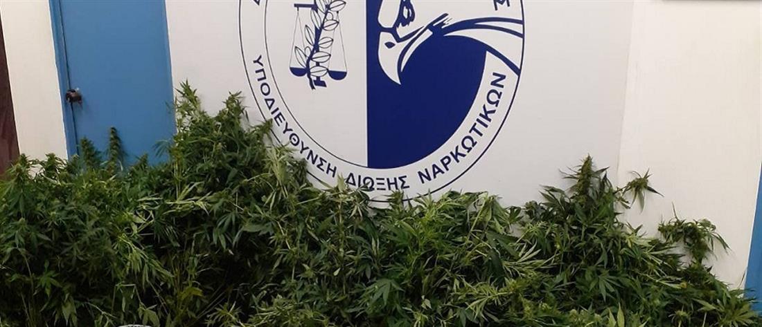 Εργαστήριο υδροπονικής καλλιέργειας κάνναβης εντοπίστηκε στην Αρτέμιδα (εικόνες)