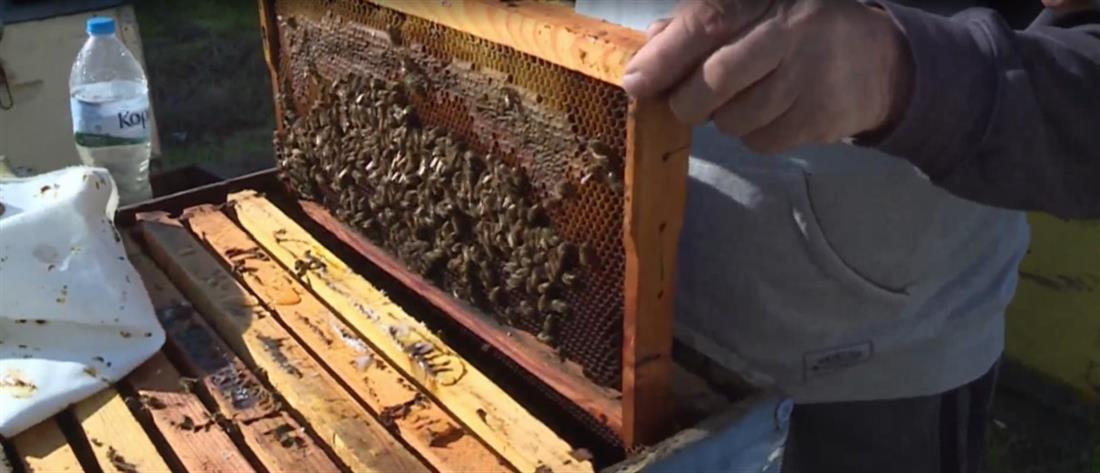 Μελίσσια - κλοπή - μέλι