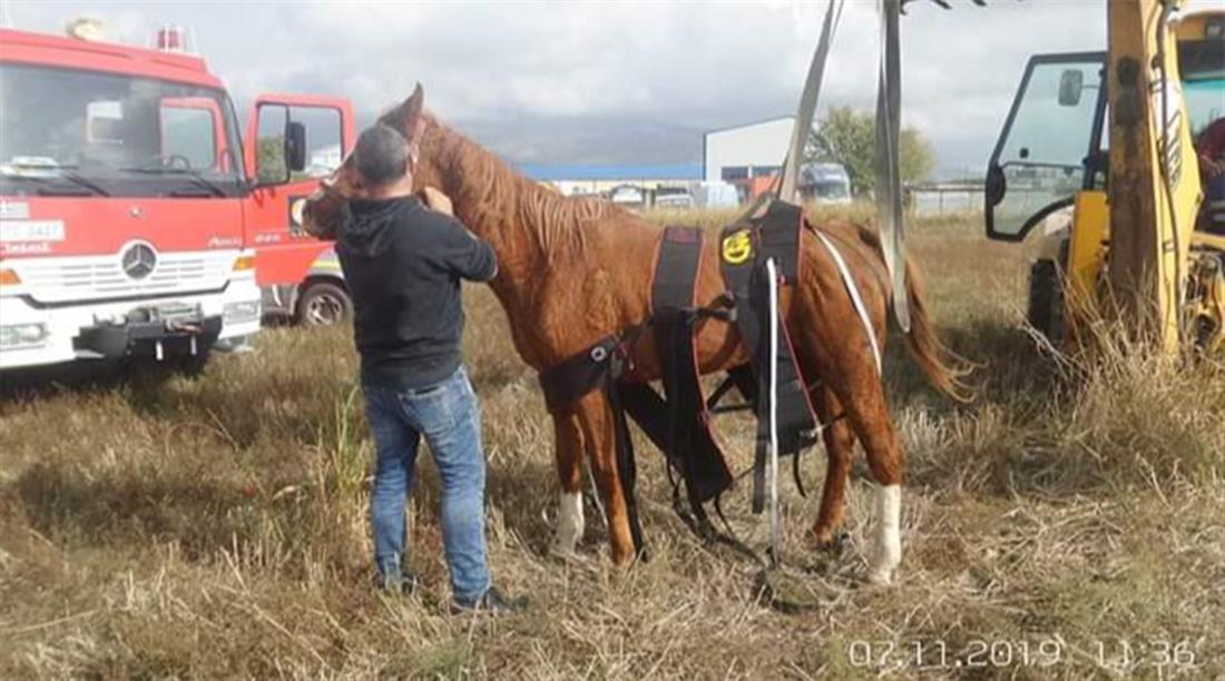 επιχείρηση διάσωσης - αλογο - φρεάτιο - Ξάνθη