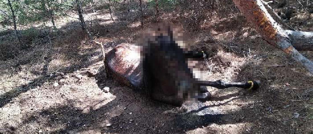 Έδεσε το άλογό του και το άφησε να πεθάνει!
