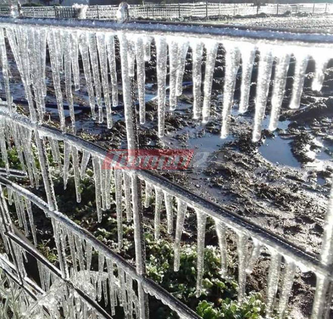Αχαΐα - χιόνια - πάγος - ζημιές - καλλιέργειες