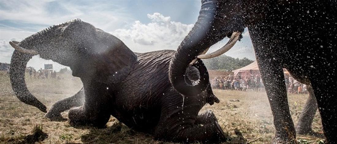 Η ξηρασία σκοτώνει τους ελέφαντες