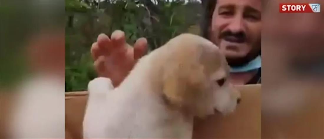 Ο Βασίλης Χαραλαμπόπουλος έσωσε κουτάβι μέσα από τα σκουπίδια (βίντεο)