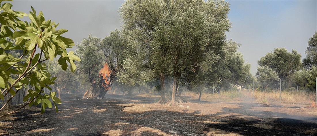 Φωτιά στην Αχαΐα: Εκκένωση χωριών και διακοπή της κυκλοφορίας (εικόνες)