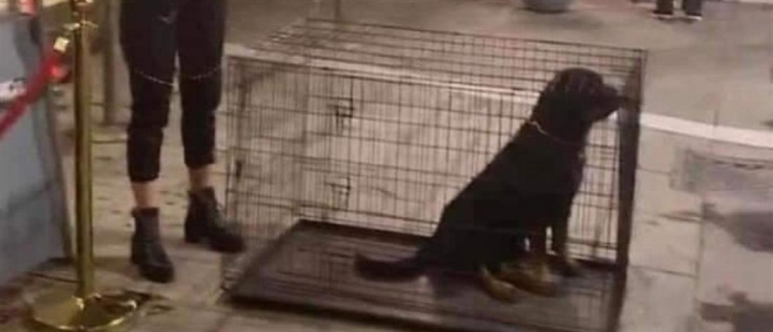 """Σάλος για την """"ατραξιόν"""" με σκυλιά σε κλουβιά στα Λαδάδικα (εικόνες)"""