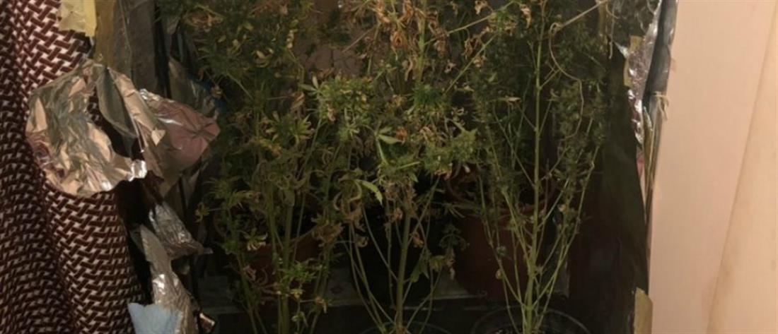 Καλλιεργούσε χασις μέσα στην ντουλάπα του σπιτιού του! (εικόνες)