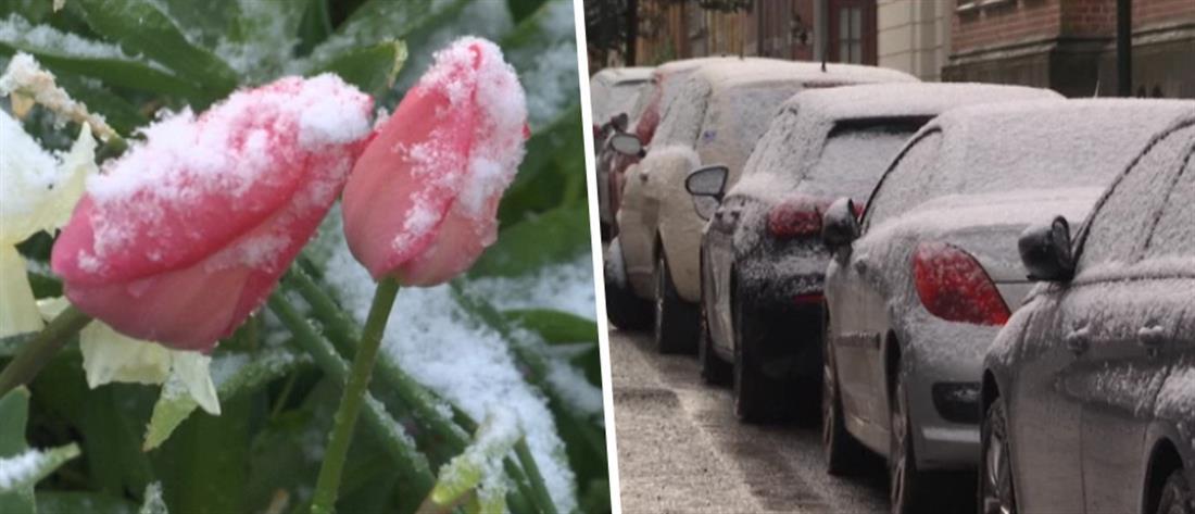 Πασχαλινό χιόνι στο Βέλγιο (εικόνες)