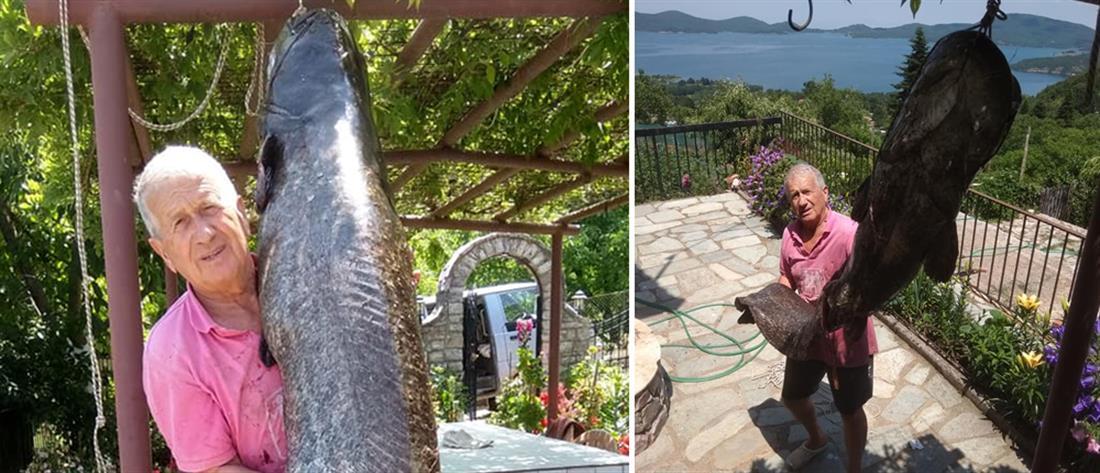 Ψάρι γίγας αλιεύθηκε στη Λίμνη Πλαστήρα (εικόνες)