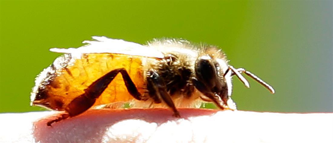 Πέθανε από τσίμπημα μέλισσας