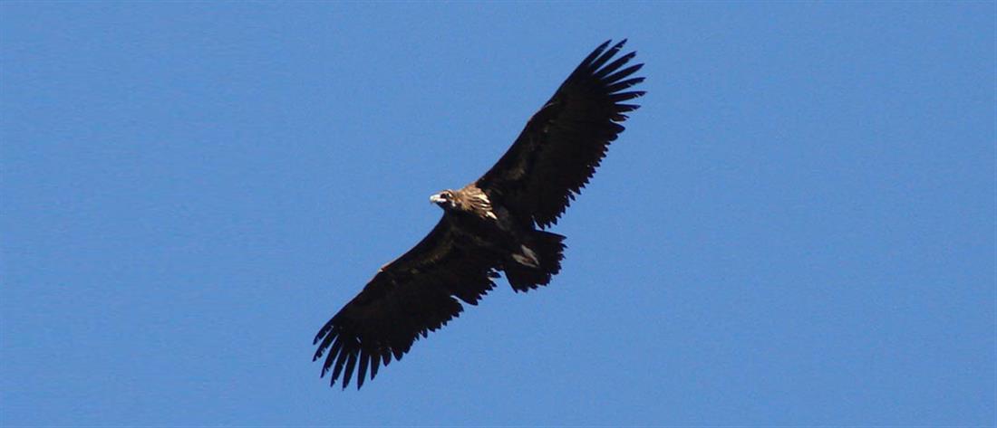 Σπάνια πτηνά σκοτώθηκαν από πρόσκρουση σε ανεμογεννήτριες