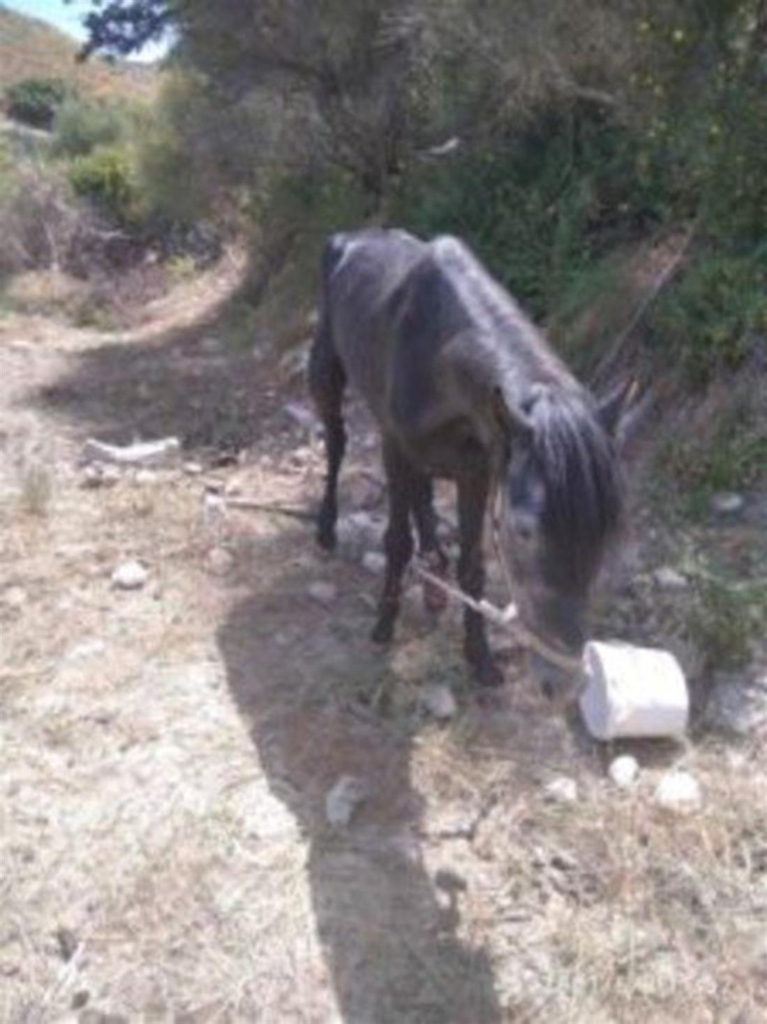 Κρήτη - βασάνιζε άλογο