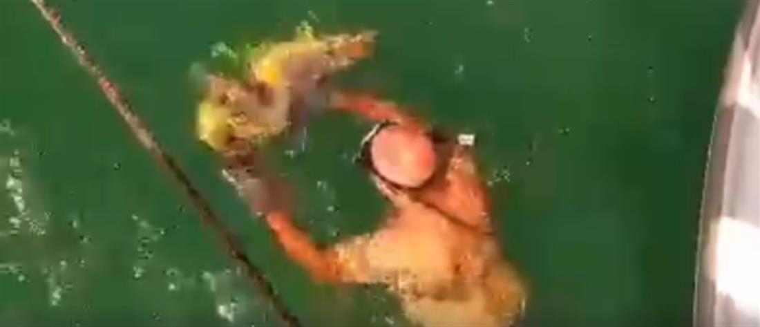 Καρέ-καρέ η διάσωση θαλάσσιας χελώνας (βίντεο)