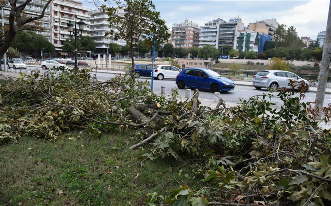 Θεσσαλονίκη - πτώση δέντρων