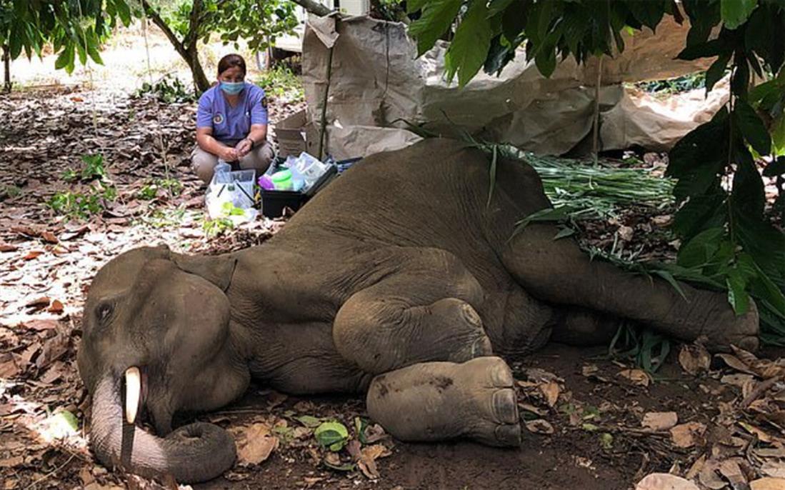 ελέφαντας - εκρηκτικά - ανανάς - Ινδία