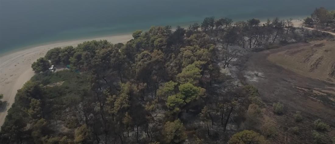 Σκρέκας στον ΑΝΤ1: κηρύσσονται αναδασωτέες μέσα σε 30 ημέρες οι περιοχές που κάηκαν (βίντεο)