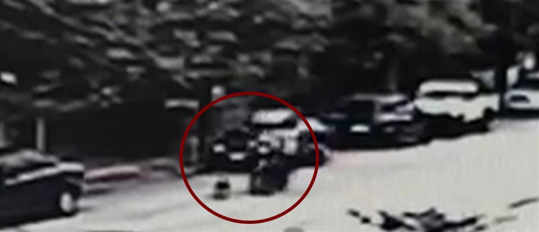 Αδέσποτος σκύλος προκάλεσε τροχαίο με ντελιβερά (βίντεο)