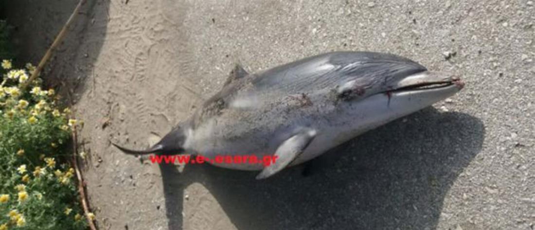 """Νεκρό δελφίνι """"ξεβράστηκε"""" σε ακτή (εικόνες)"""
