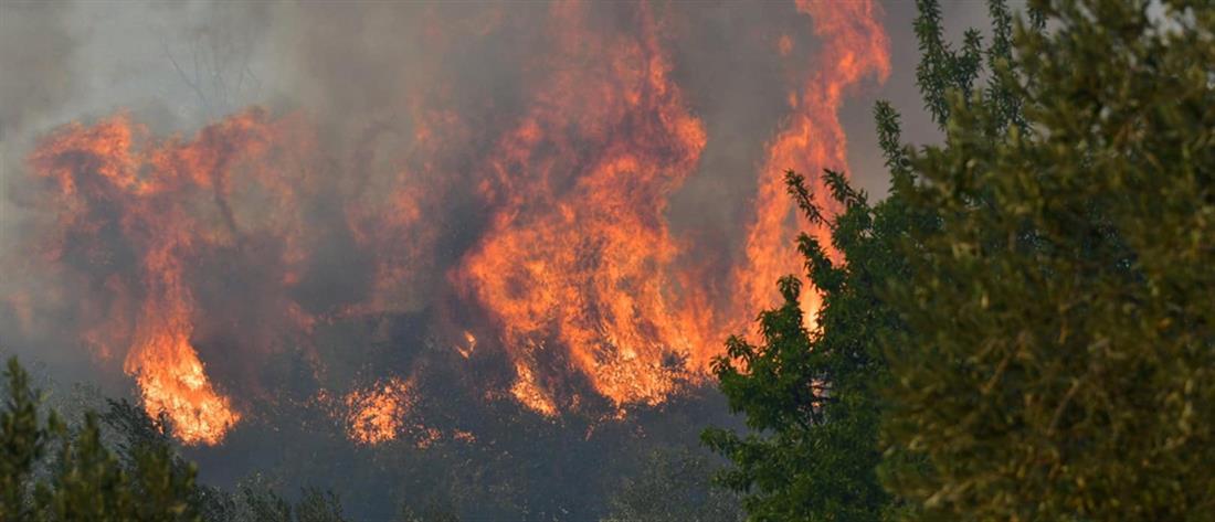 """Φωτιά στην Επίδαυρο: Μήνυμα από το """"112"""" για εκκένωση χωριού"""