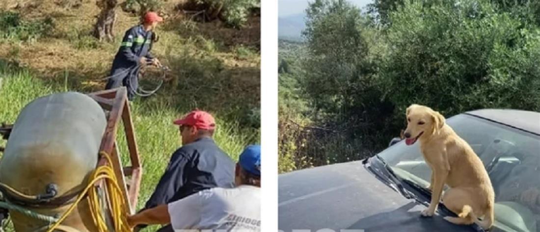 """Σύγχρονος """"Χάτσικο"""" στην Αχαΐα: σκύλος ανέβηκε στο καπό αυτοκινήτου με τον τραυματία ιδιοκτήτη του!"""