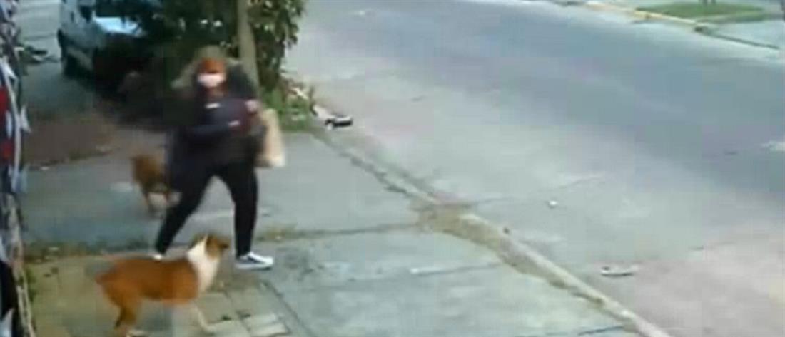 Αργεντινή: επίθεση σε γυναίκα από  πιτ μπουλ (βίντεο)