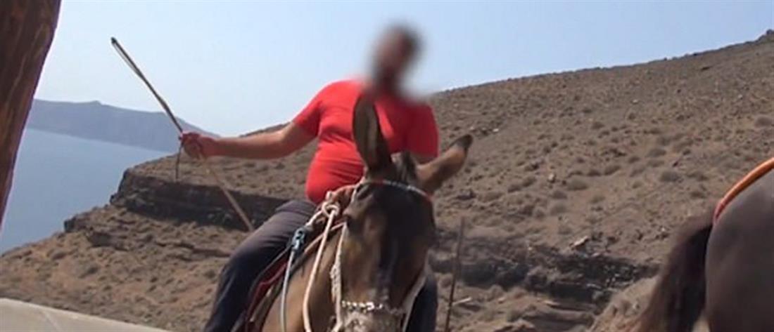 Νέο βίντεο με βασανιστήρια σε γαϊδουράκια στην Σαντορίνη
