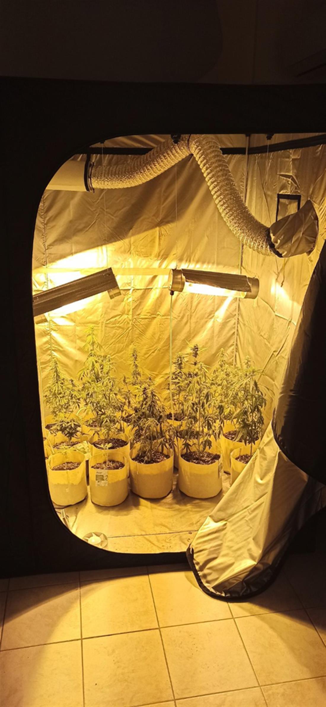 Σέρρες - διαμέρισμα  καλλιέργεια κάνναβης