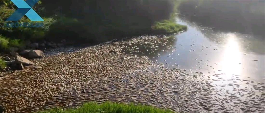 Βιστωνίδα και Ισμαρίδα γέμισαν με χιλιάδες νεκρά ψάρια (εικόνες)