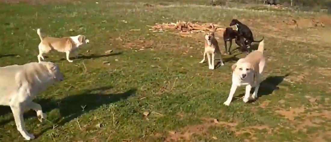 Πέθανε ο άνδρας που δέχθηκε επίθεση από αγέλη σκύλων