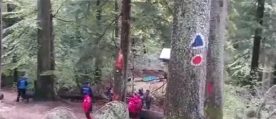 Αρκούδα επιτέθηκε σε εργάτες (βίντεο)